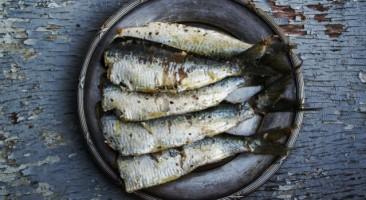 Quaresma: por que o peixe não é considerado 'carne'?